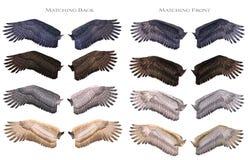 配比的翼 免版税图库摄影