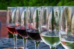 酒取样器特写镜头在一个中西部的葡萄园的 免版税库存图片