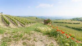酒的看法在这个区域山麓导致区域Barbaresco在意大利 图库摄影