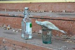 酒精中毒概念, 12 免版税库存图片