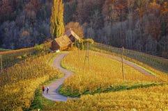 酒路和葡萄园以心脏的形式与两个步行者 库存照片