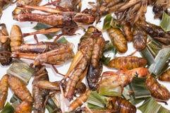 酥脆油煎的昆虫,幼虫幼虫,蚂蚱,蟋蟀 库存照片