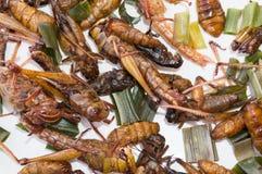 酥脆油煎的昆虫,幼虫幼虫,蚂蚱,蟋蟀 库存图片