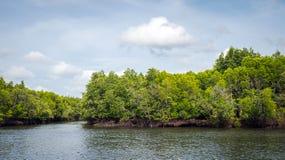 酸值朗塔,泰国美洲红树森林  免版税库存照片