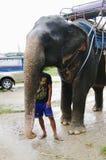 酸值苏梅岛,泰国- 2013年10月23日:在鞔具和年轻男孩mahout的大象 免版税库存图片