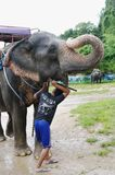 酸值苏梅岛,泰国- 2013年10月23日:在鞔具的大象有举的树干和年轻男孩mahout的 免版税库存图片