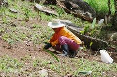 酸值苏梅岛,泰国- 2013年10月23日:妇女花匠在庭院里工作 免版税库存图片