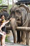 酸值苏梅岛,泰国- 2013年10月23日:男孩和女孩与大象沟通 免版税图库摄影