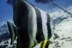酸值陶海滩,潜水的假期 免版税库存照片