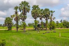 酸值kong省在泰国边界附近的柬埔寨王国 库存照片