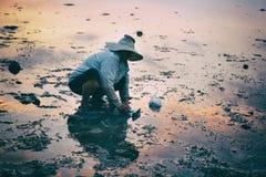 酸值Pangan,泰国- 2014年1月27日, :传统泰国帽子的人收集螃蟹在日落 免版税库存图片