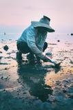 酸值Pangan,泰国- 2014年1月27日, :传统泰国帽子的人收集螃蟹在日落 图库摄影