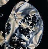 酸抗坏血症的水晶 免版税库存照片
