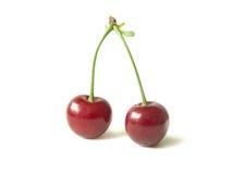 酸的樱桃 库存图片