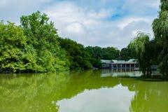 酸绿色水彩池塘,中央公园, NYC 免版税库存照片