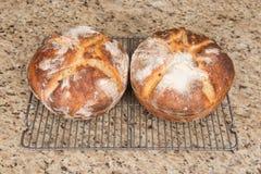 酸面团面包新鲜的被烘烤的大面包 图库摄影