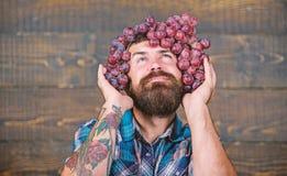 酿酒厂概念 有胡子举行葡萄的人在顶头木背景的 葡萄酒商人感到骄傲为葡萄收获英俊 库存照片
