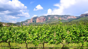 酿酒厂葡萄葡萄园风景 免版税库存照片