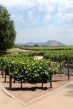 酿酒厂` Concho y Tora `的葡萄园 图库摄影