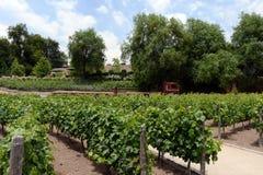 酿酒厂` Concho y Tora `的葡萄园 免版税库存照片