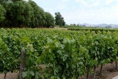 酿酒厂` Concho y Tora `的葡萄园 免版税图库摄影