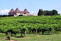 酿酒厂vienyard的充满活力的绿色 图库摄影