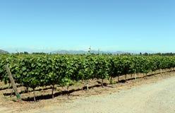 酿酒厂Viu Manent的葡萄园 图库摄影