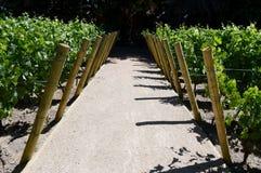 酿酒厂Viu Manent的葡萄园 免版税库存图片