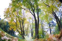 醇厚的秋天,下落的叶子在秋天森林里在 免版税库存照片
