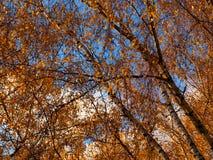 醇厚的秋天 免版税图库摄影