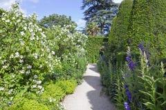 醉汉使有白花的,修剪的花园树庭院环境美化 图库摄影