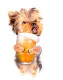 醉酒的狗用啤酒 免版税库存照片