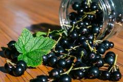 黑醋栗的莓果在桌上驱散了 库存图片