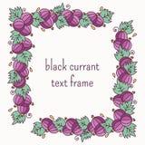 黑醋栗装饰的语篇框架图 免版税库存图片