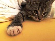 醒从它的休息的困小猫 图库摄影