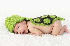 醒来新出生的乌龟 免版税库存图片