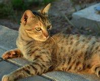 醒的猫 免版税图库摄影