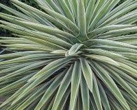 醒目的多汁植物 库存图片