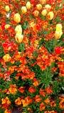 醒目的花的布置 免版税库存图片