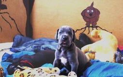 醒逗人喜爱的小狗 免版税库存图片