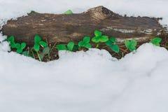 采伐与雪和第一片绿色叶子的覆盖物 免版税库存图片