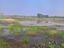 水采伐了种田的土地 免版税图库摄影
