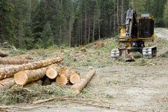 采伐作业 图库摄影