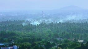 采伐和灼烧的雨林森林火灾envrionmental问题 股票录像