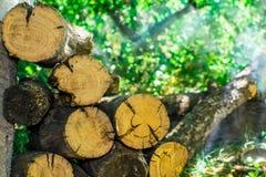 采伐堆木柴 免版税库存照片