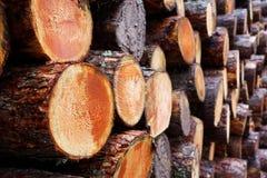 采伐的产业-堆新近地切好的树干 库存照片