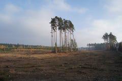 采伐的区域在一个有薄雾的秋天晚上 免版税库存照片