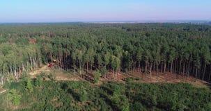 采伐的鸟瞰图,在一个工业规模的砍伐森林,砍伐森林用特别设备,砍伐森林  股票视频
