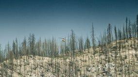 采伐的直升机 股票录像