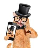 采取与智能手机的猫一selfie 库存照片